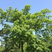 使用する木材と環境保全について